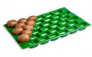 alveolos para kiwi
